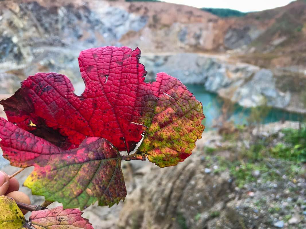 Blad med flotte efterårsfarver ved stenbrud i Kina